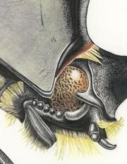 Entomology-Button