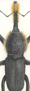 thumbnail_4-Entomology